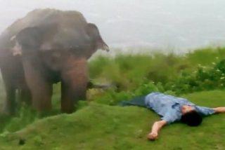 El vídeo de elefante que casi mata a un borracho 'inconsciente'