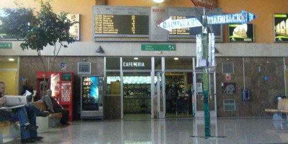 La muestra 'El mundo de las cigüeñas' llega a la Estación de Autobuses de Cáceres