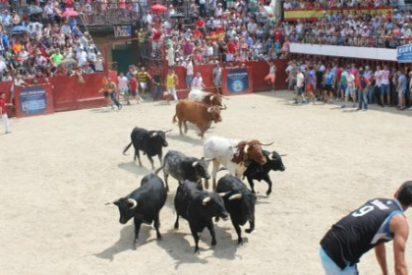 La localidad cacereña de Moraleja, presente en la Feria del Toro de Olivenza