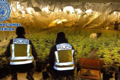 La Policía Nacional localiza 1.735 plantas de marihuana en el sótano de un chalé de lujo de Madrid