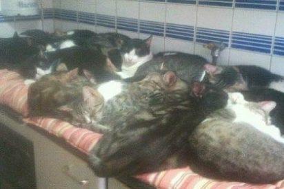 El desesperado SOS de una mujer que vive con 50 gatos en casa