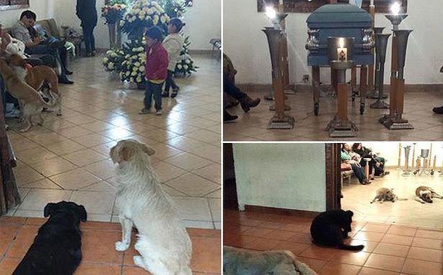 Perros callejeros se presentan en el funeral de la mujer que les cuidaba