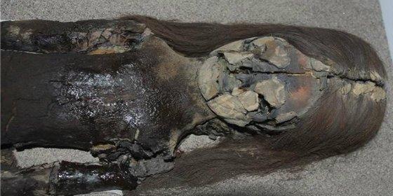 El misterio de las momias que se destruyen tras 7.000 años
