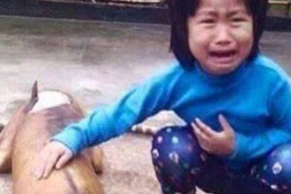 La espeluznante historia de la niña que encuentra a su perra perdida... ¡asada en un restaurante!