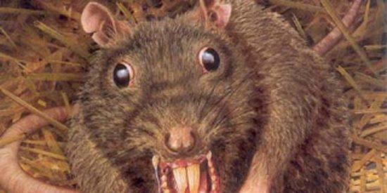 [Vídeo] Suelta un rata recién bañada en un restaurante de postín para irse sin pagar