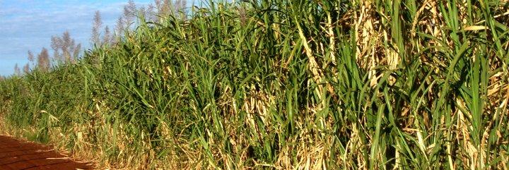 Agricultura Extremadura convoca ayudas para fomentar la utilización de biocombustible