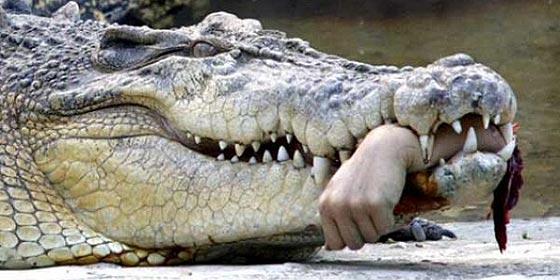 [Vídeo sin censura] El horrorizado padre encuentra a su hijo perdido...¡en el estómago de un cocodrilo!