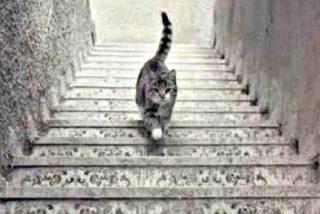 La imagen que tiene a Twitter con los pelos de punta: ¿Sube o baja el gato las escaleras?