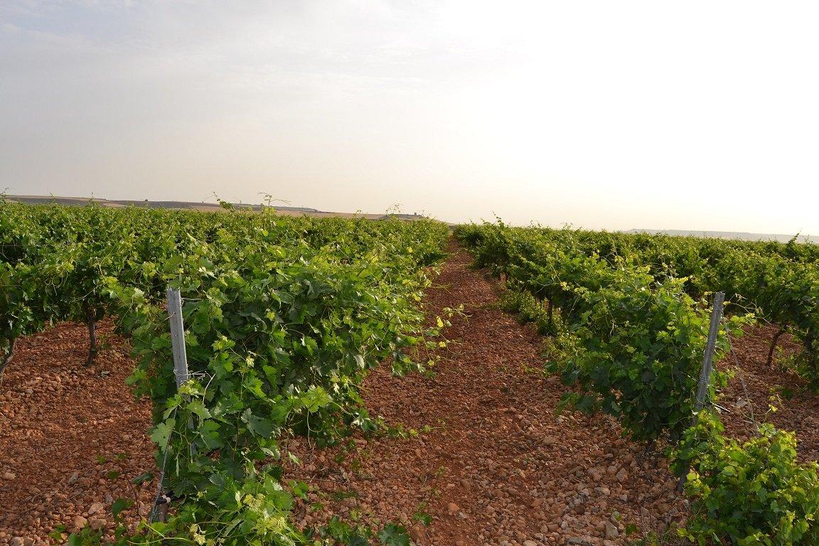 Matarromera utiliza sensores inalámbricos remotos para mejorar la producción y rentabilidad de sus viñedos