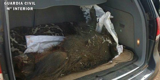 Detenido en Fuenlabrada de los Montes un presunto furtivo tras dar caza a un jabalí