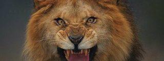 El último instante del león antes de saltar sobre su presa: el fotógrafo