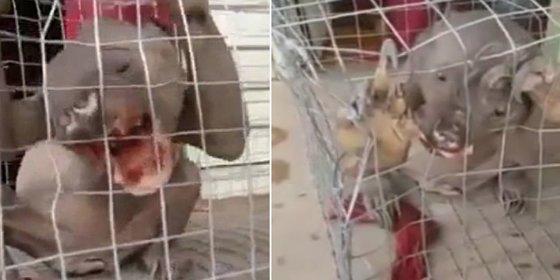 El vídeo de la fantasmal y mordiscona criatura capturada en un embalse chino