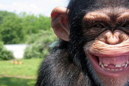 Se fuga del zoo una 'enamorada' pareja de chimpancés y matan de un disparo a la hembra