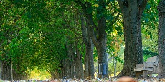 Parque de la Dehesa: El pulmón natural de Soria