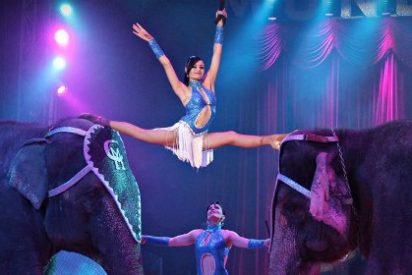 """El Gran Circo Mundial llega a Cáceres con su nuevo espectáculo """"Bailando con Tigres"""""""
