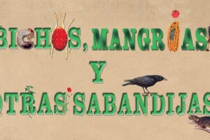 """La exposición """"Bichos, mangrias y otras sabandijas, hasta el 8 de junio en Plasencia"""
