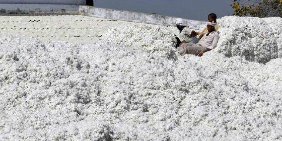 El porqué se han suicidado 300.000 granjeros en la India no es un secreto