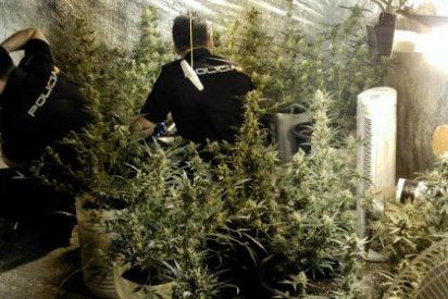 Desmantelada una plantación de marihuana en un trastero del barrio de La Data (Plasencia)