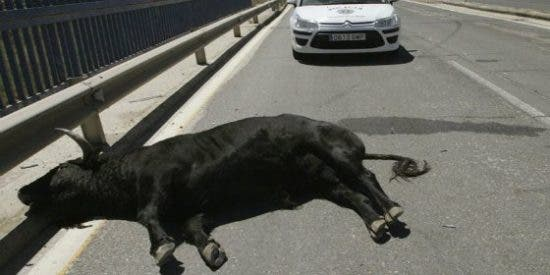 El vídeo del toro de Talavera que se ha escapado hiriendo a 11 personas