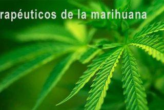 Encuentran bolsas de marihuana en el falso techo de la habitación de un asilo en Oviedo