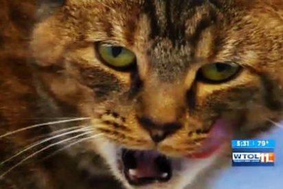 La mujer que se ha quedado ciega de un ojo por un lametón de su gato