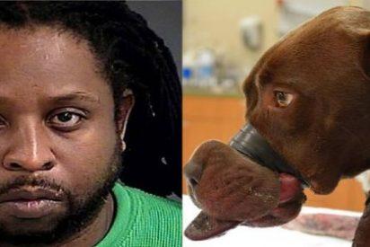 Detenido por cerrarle la boca a su perra con cinta aislante y provocarle graves heridas