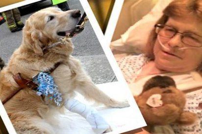 El perro que se ha lanzado bajo un autobús para salvar a su dueña ciega