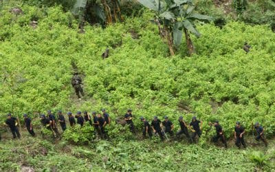 Francisco mascará hojas de coca en Bolivia