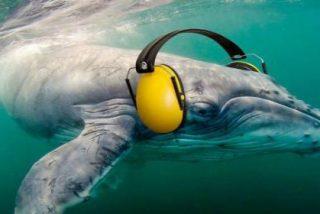 Cairn Energy renuncia a los permisos para las prospecciones en el Mediterráneo