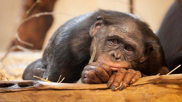 """El chino que trasplanta cabezas a ratones hará lo mismo con monos: """"Para que vivan un rato"""""""