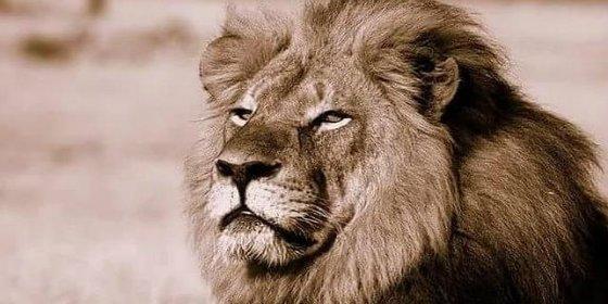 ¿Quién es el infame cazador español que ha decapitado al viejo león 'Cecil'?