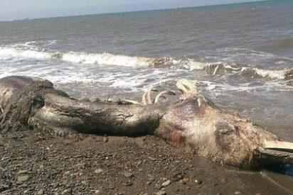 La misteriosa criatura marina peluda que desconcierta a los científicos