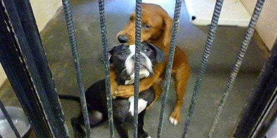 El abrazo de las perritas a punto de ser sacrificadas que les salva la vida