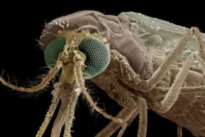 Las tácticas que emplean los mosquitos para picarte... y técnicas de 'camuflaje' para escapar del ataque