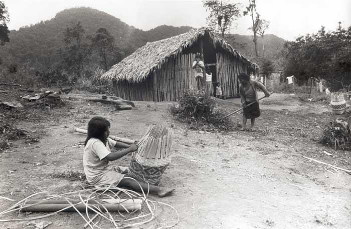 Alabada seas, ecología guaraní