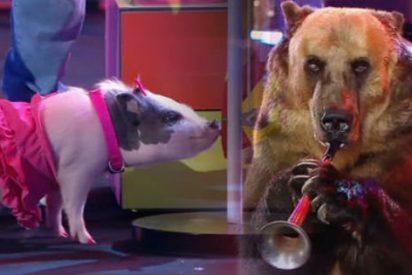 """'¡Vaya fauna!', una oda al frikismo más rancio ¿Deberían cancelarlo por """"maltrato animal""""?"""