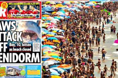 El 'tiburón británico' que aterroriza Benidorm ni es tiburón ni siembra el pánico entre los turistas