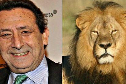 """Alfonso Ussía: """"Cecil iba a morir en un año; desdentado, desnutrido y en boca de una manada de hienas"""""""