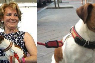 ¿Qué hacía 'Pecas', el perrito de Esperanza Aguirre, en la sede del PSOE?