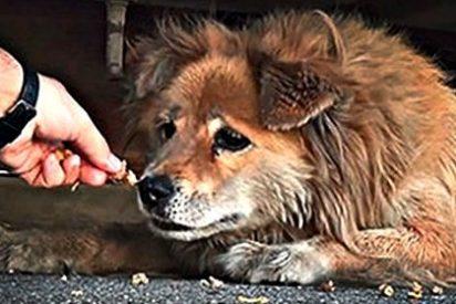 Los venezolanos reducidos a la condición de perros y gatos: recurren a los medicamentos veterinarios