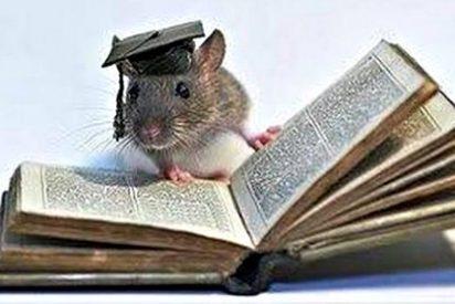 Los científicos crean ratones superlistos investigando trastornos cerebrales