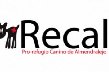 El Refugio Canino de Almendralejo pone en marcha una campaña de recogida de alimentos