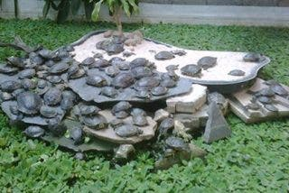 El lento calvario de las tortugas en la estación de Atocha