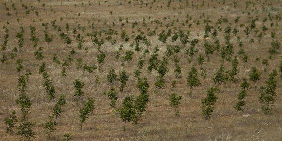 El Corte Inglés dona 6.450 euros a FSC para la conservación de los bosques sostenibles