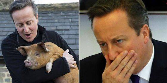 """#piggate: ¿Cochina venganza? """"¡Cameron metió sus partes íntimas en la boca de un cerdo muerto!"""""""