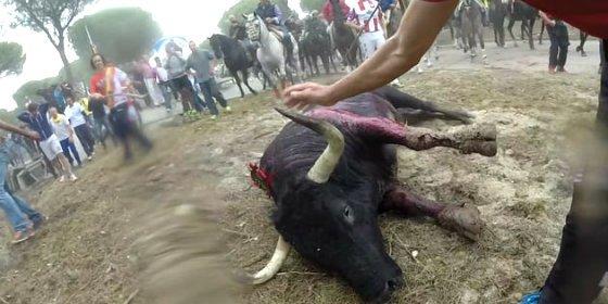 [VÍDEO] Y al final, Rompesuelas, el Toro de la Vega, muere de forma bastante chapucera