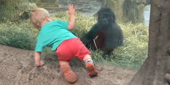 El vídeo del divertido juego 'pilla-pilla' entre un gorila y un niño en el zoo