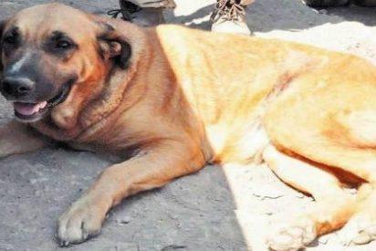 La perra salva a un niño abandonado de 2 años... ¡dándole de mamar!