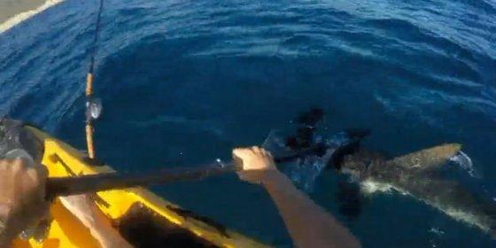 La aterradora pelea entre un tipo en canoa y un feroz tiburón martillo