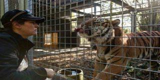 La experta cuidadora del zoo a quien ha despedazado un tigre de Sumatra